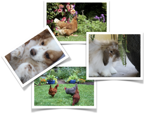 Collage of dogs, cats and chickens