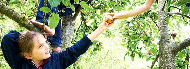 Girl holding her friends hand climbing a tree