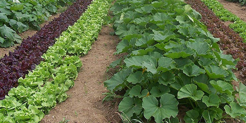 Edbile forest - vegetable garden
